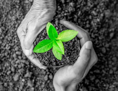 Händer planta